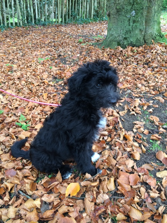 Hector My First Walk