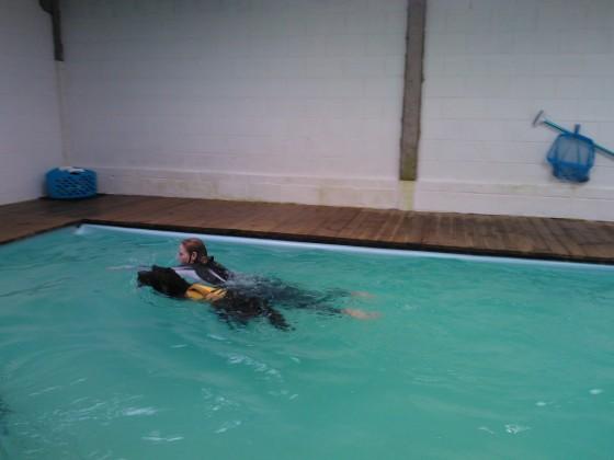 Bordoodle swimmimg