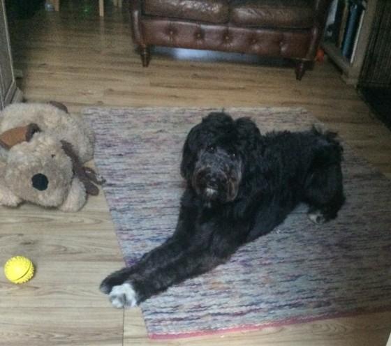 Hector's bigger rug